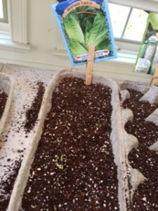 Starting Seeds First Sprouts