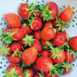 June Strawberries
