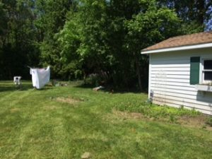 Landscaping Garden and Shed Before